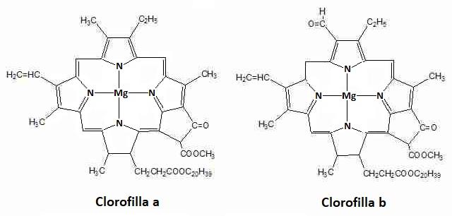 clorofille.png
